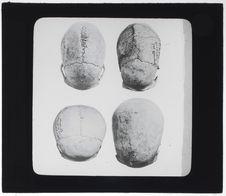 Crânes des Iles Loyalty, de Basse-Californie, de Cro-Magnon et du Yucatan
