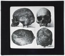 Crâne de Paltacalo