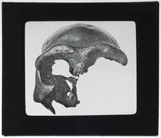 Crâne de Galilée