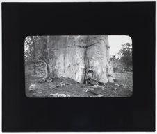 Baobab servant de sépulture