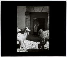 Cuzco : Indien buvant de la chicha