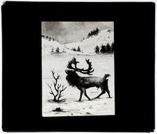 Le renne