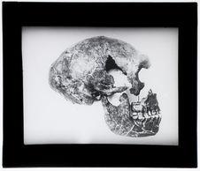 Reconstitution du crâne de la Quina