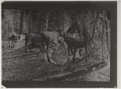 Femme trayant un renne