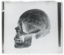 Crâne de Vaimaca