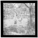 Sans titre [oiseaux photographiés dans un parc zoologique australien]