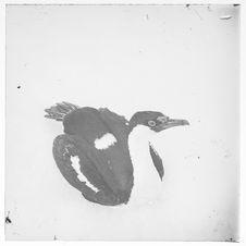 Sans titre [oiseau]