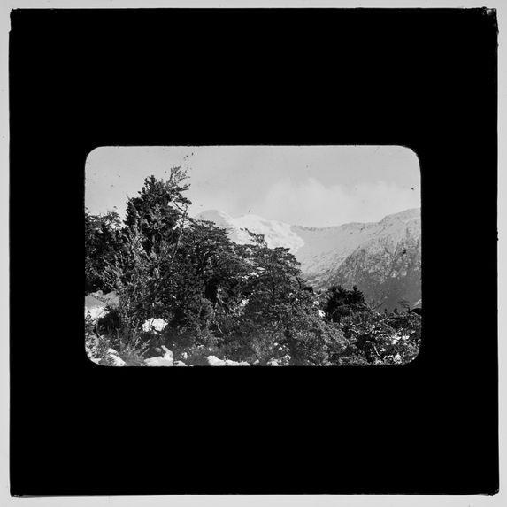 Sans titre [arbres devant un paysage de montagne]