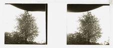 Sans titre [un arbre]