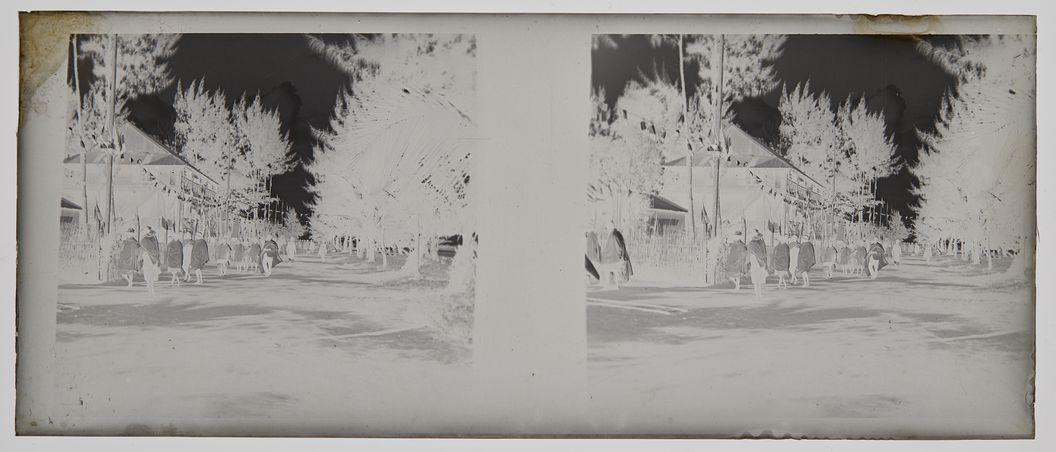 Sans titre [une rue bordée d'arbres]